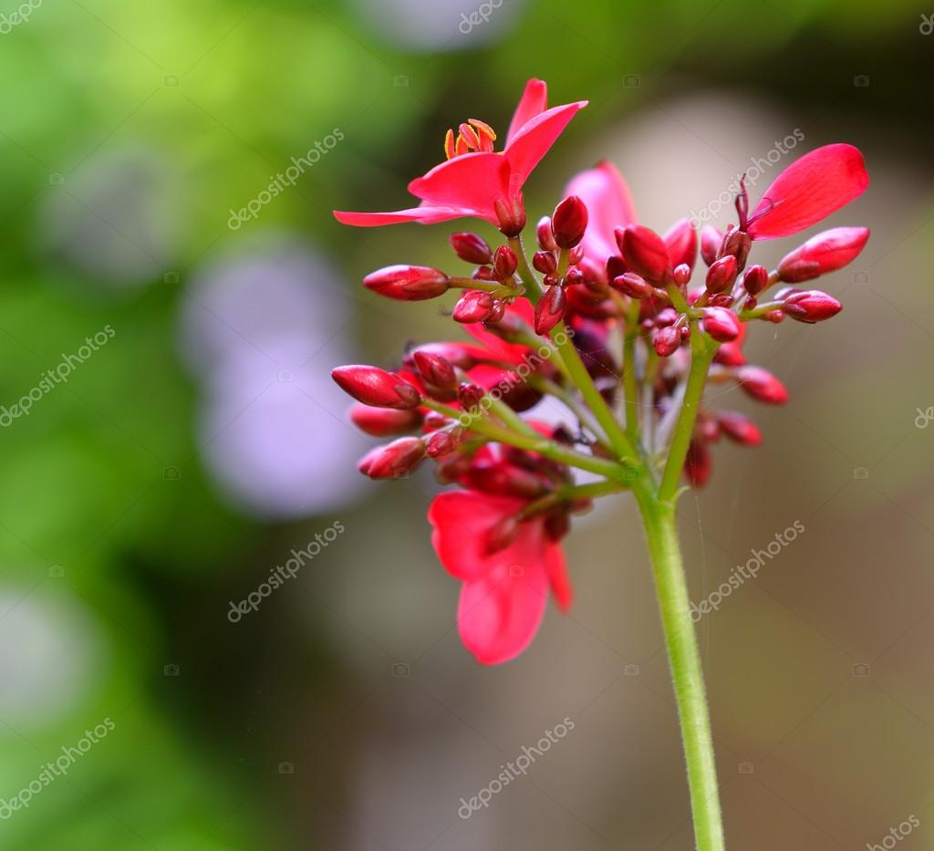 Fleur Rouge Tropique Photographie Galdzer C 18820437