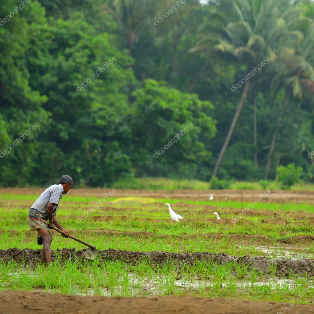 manual work of the man on the rice field