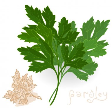 Fresh parsley leaves on white.
