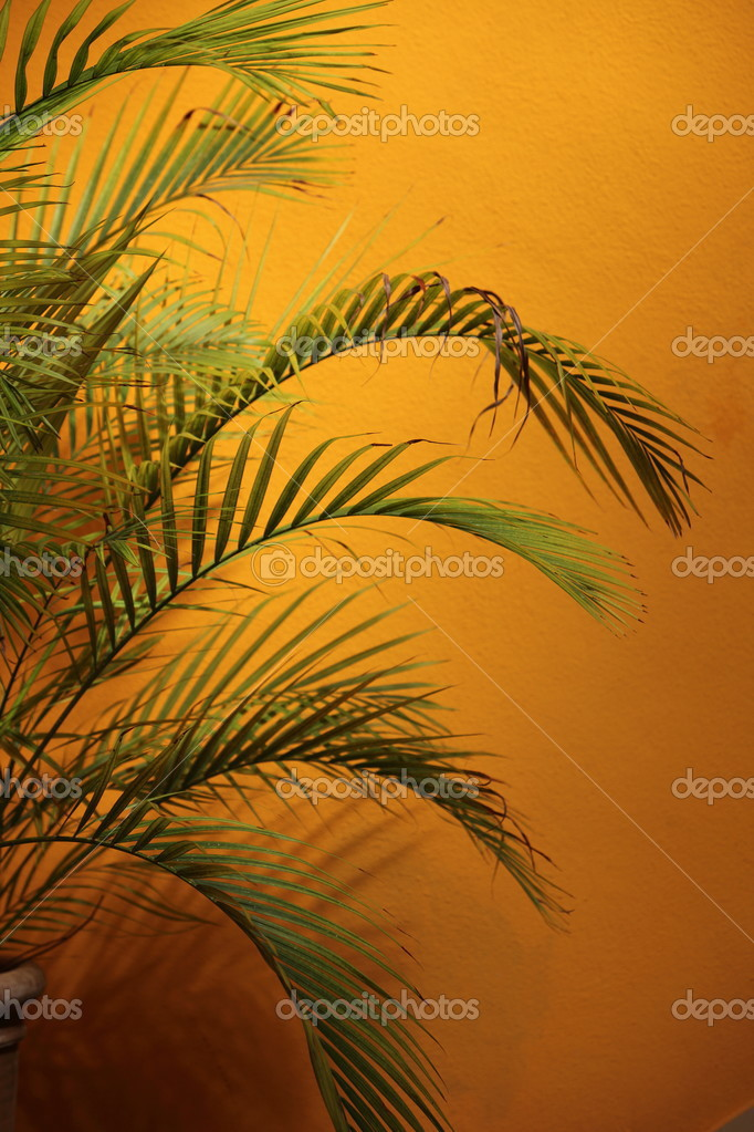Palm Tree Fronds Against A Glowing Orange Wall Stock Photo