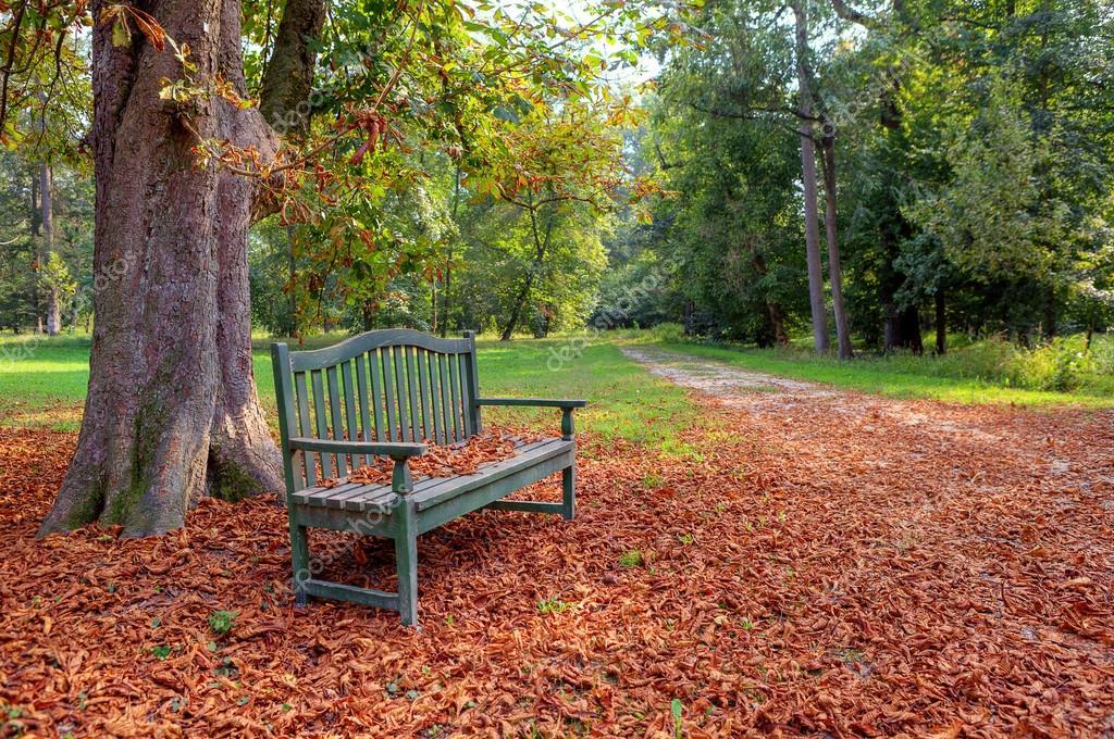 秋の公園のベンチ — ストック写...