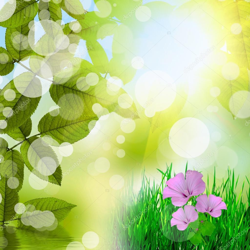 Immagini Sfondi Verdi Fiori Naturale Sfondo Verde Con Fiori