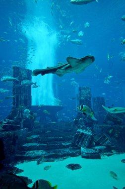 Aquarium of Atlantis the Palm hotel