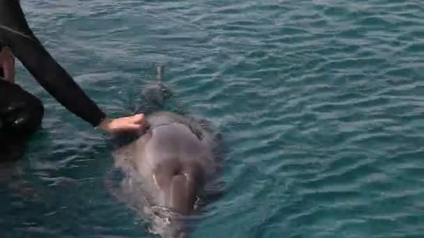 dojemné delfín