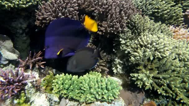 akvárium halak