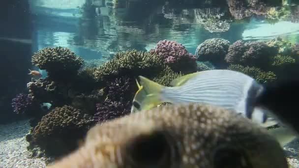 tropické ryby v akváriu