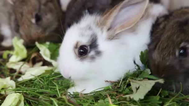 Rabbit family feeding grass