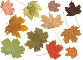 őszi levelek felett fehér