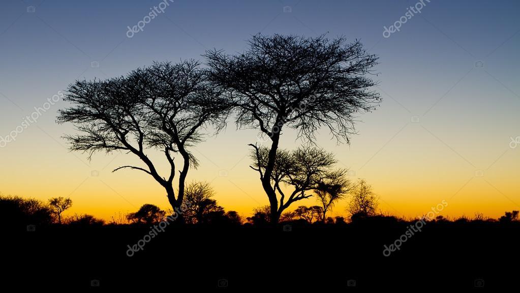 Sunrise in the Kalahari, Botswana