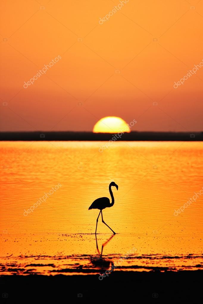 Flamingo wading in the lagoon