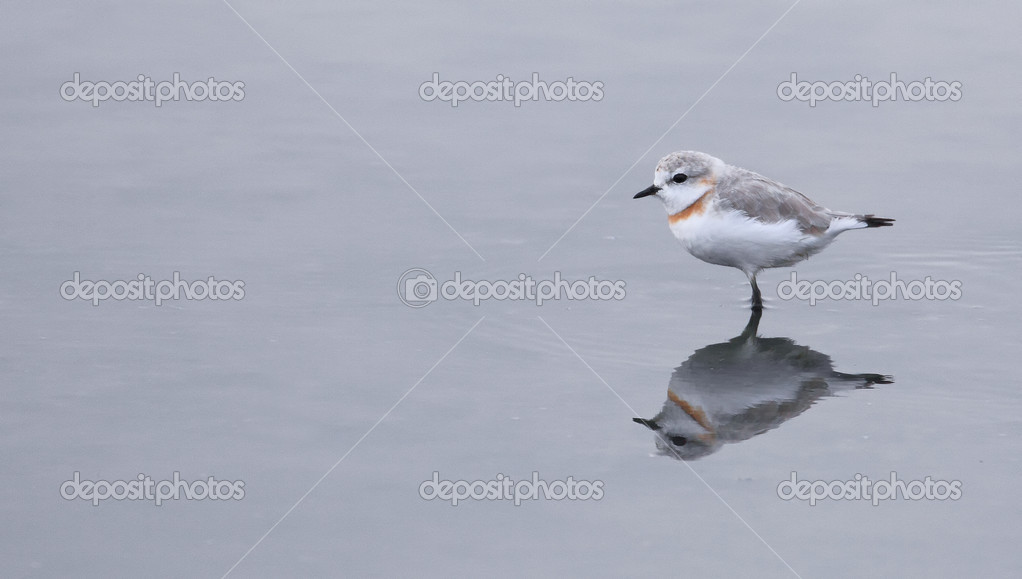 Water Birds wading in a lagoon