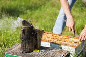Fotografie Bee Smoker With Apiarist Working On Farm