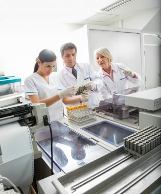 Team Analyzing Samples In Laboratory