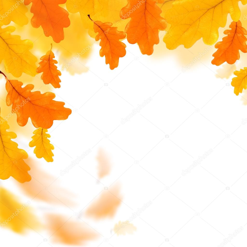 Autumn leaves border isolated over white