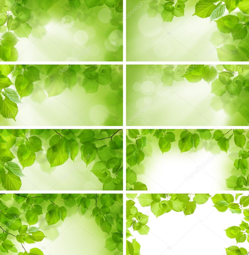 Green leaves - background and border, design elements