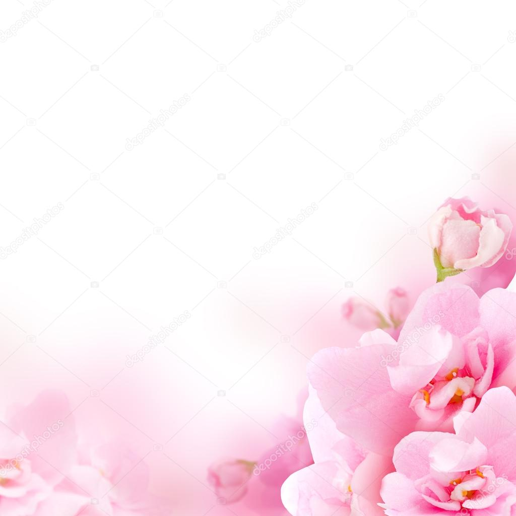 Blossom - pink flower, floral background