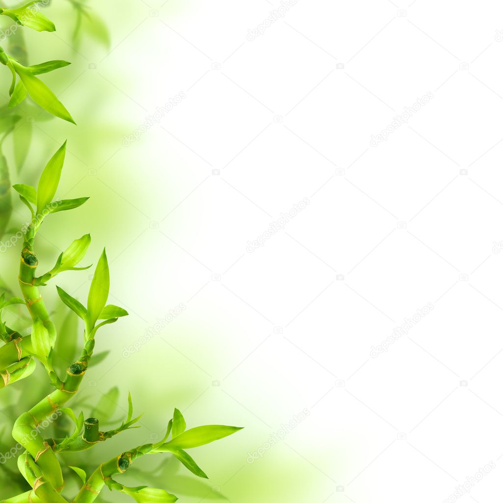 Bamboo and green leaves, background