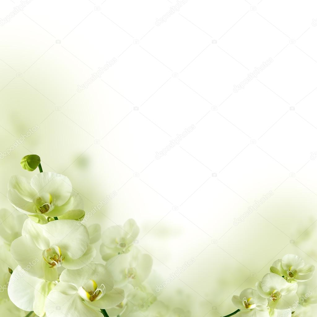 Orchid flowers and greenery, spring floral background
