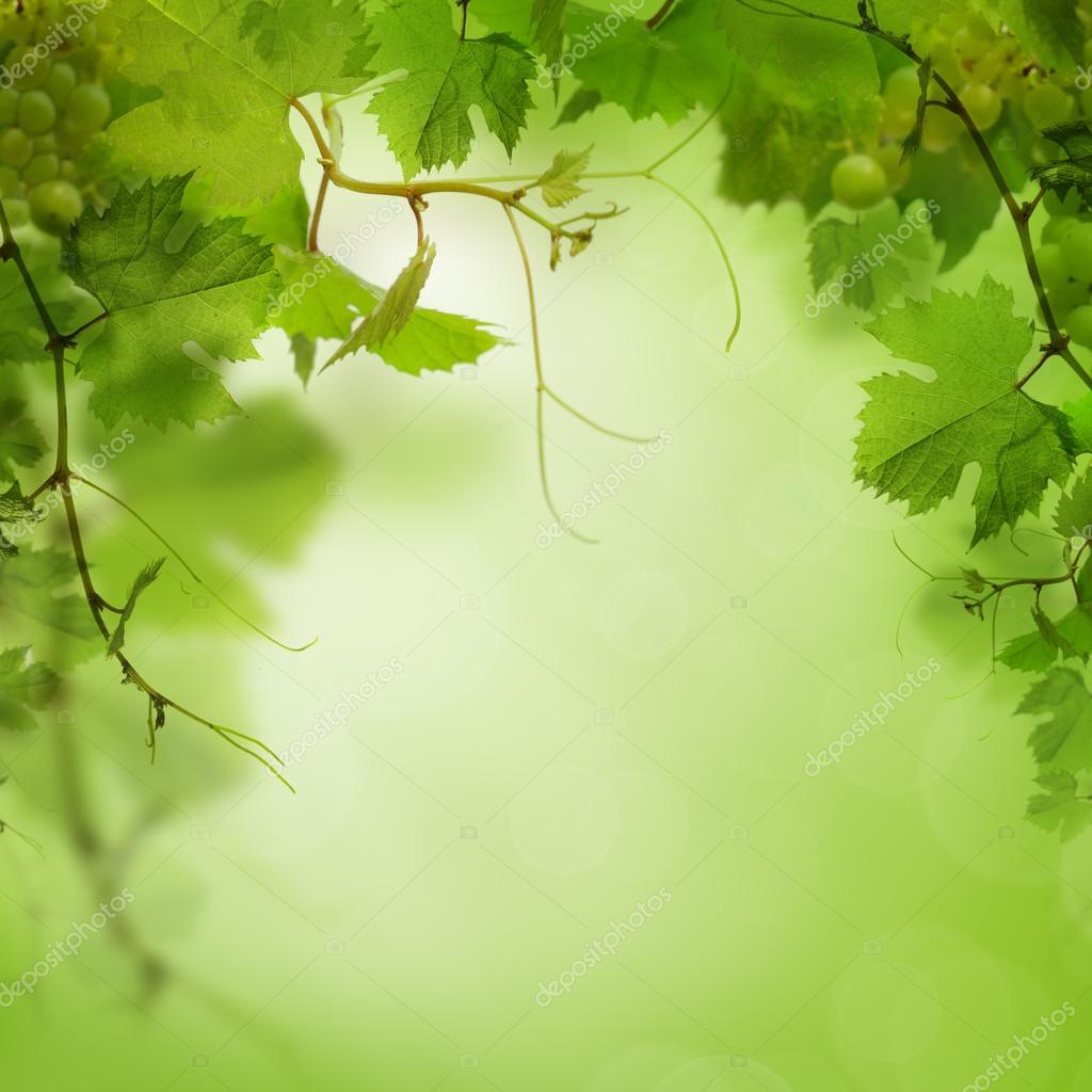 Green Background With Grape Leaves Stock Photo Image By C Artmim 29748259
