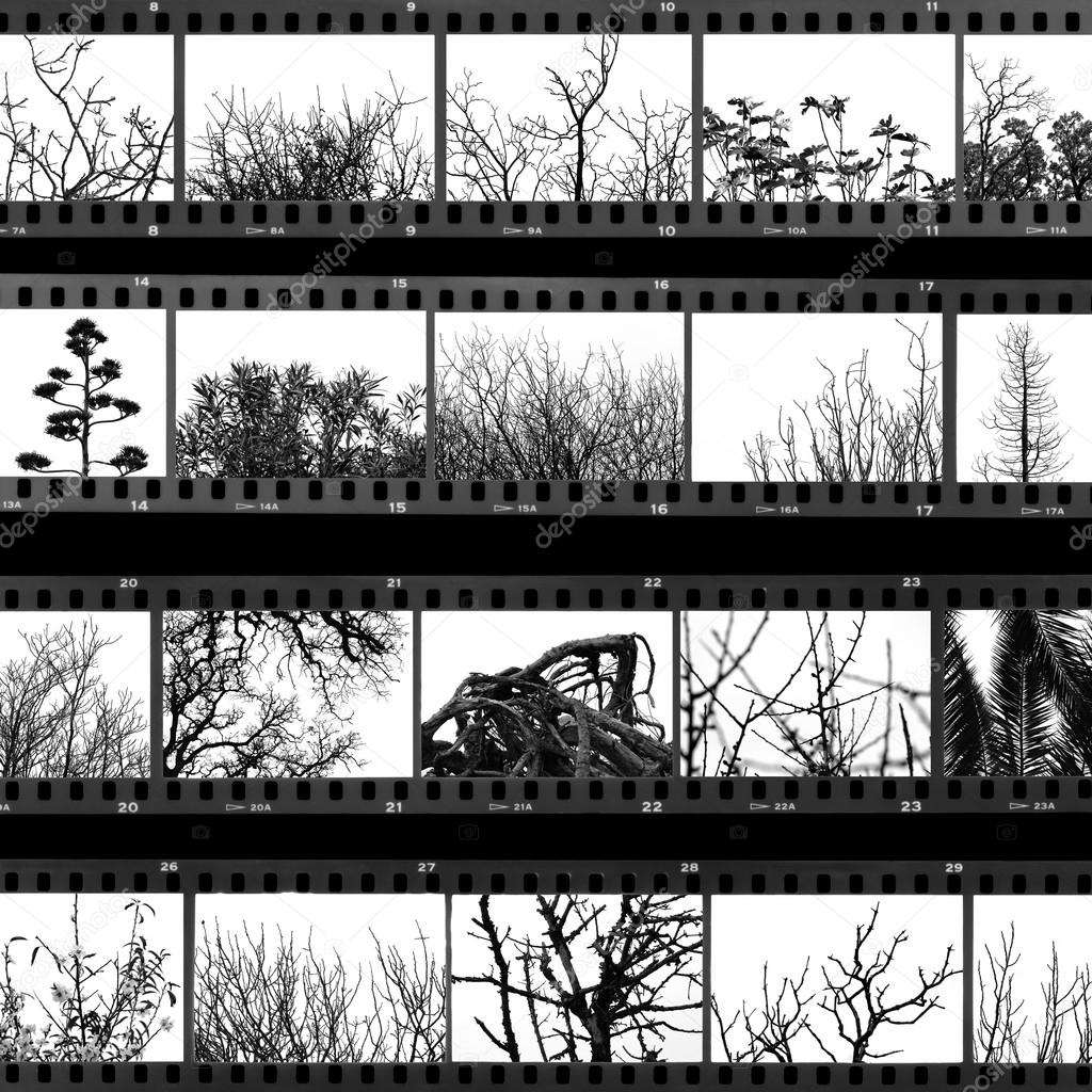 Trees and plants film proof sheet
