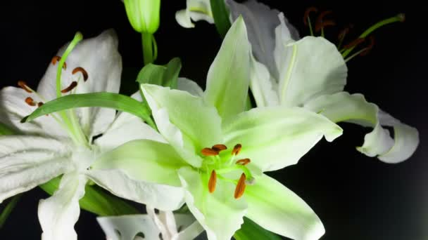 fehér liliom.
