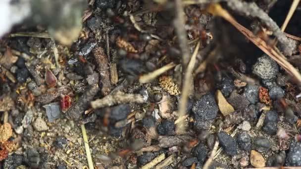 Ant nest. Macro.