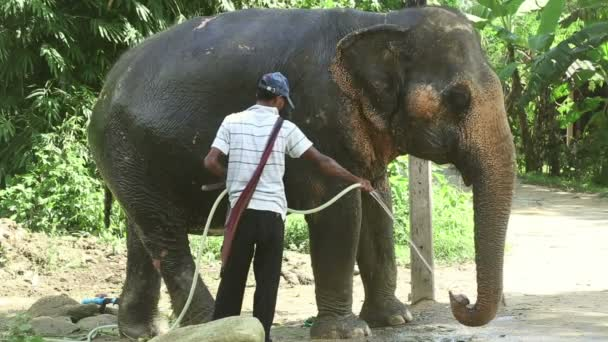 Waschen des Elefanten