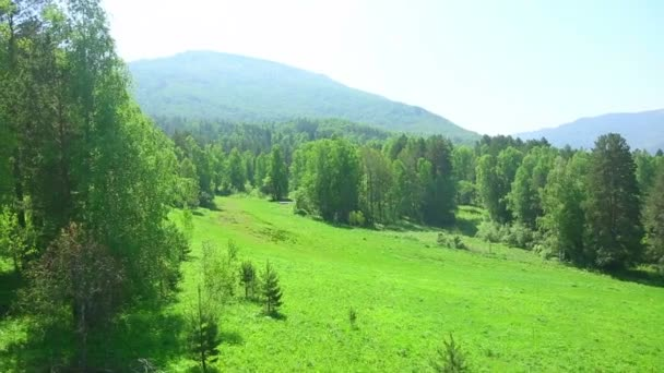 Mountain Forest
