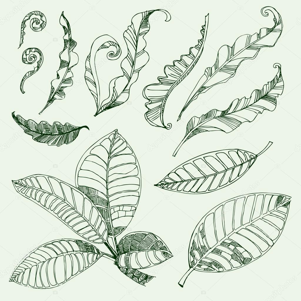 Coffee and fern leafs