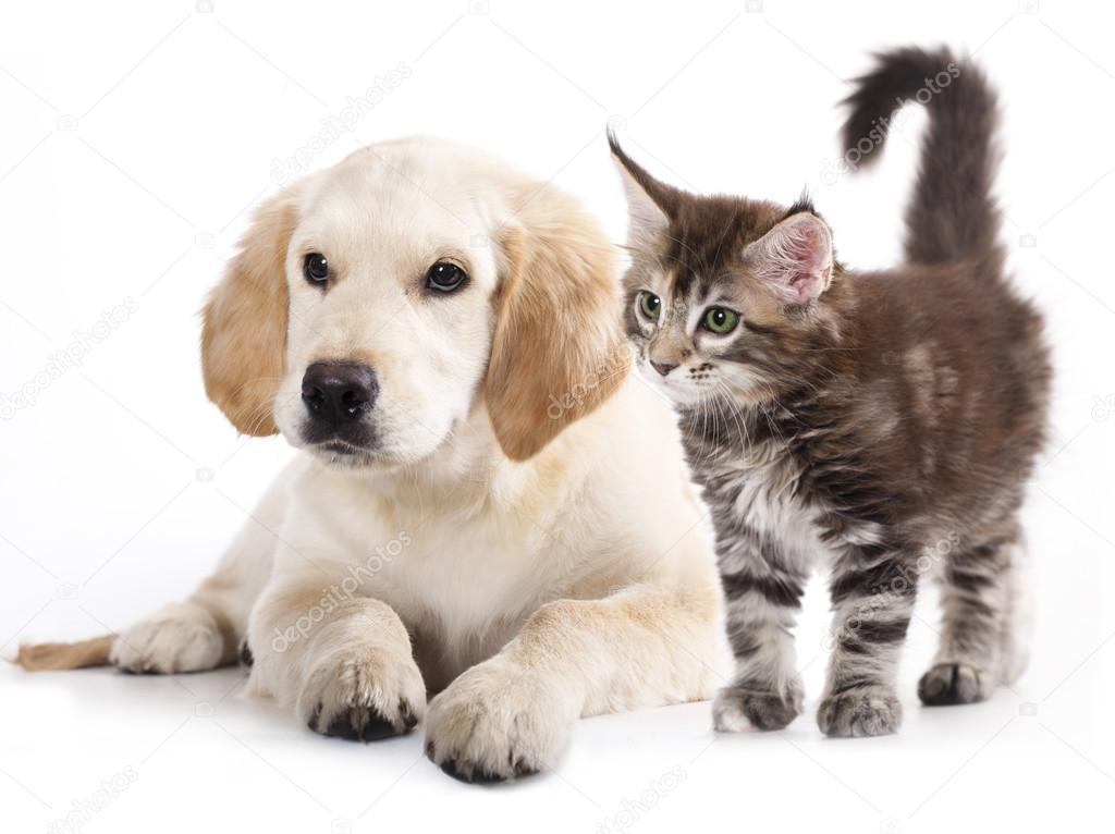 Кошка и собака — Стоковое фото © Lilun_Li #12600153