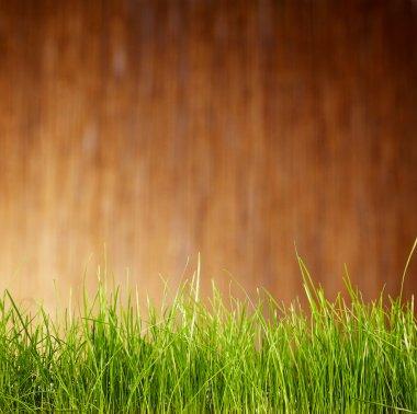 Garden background
