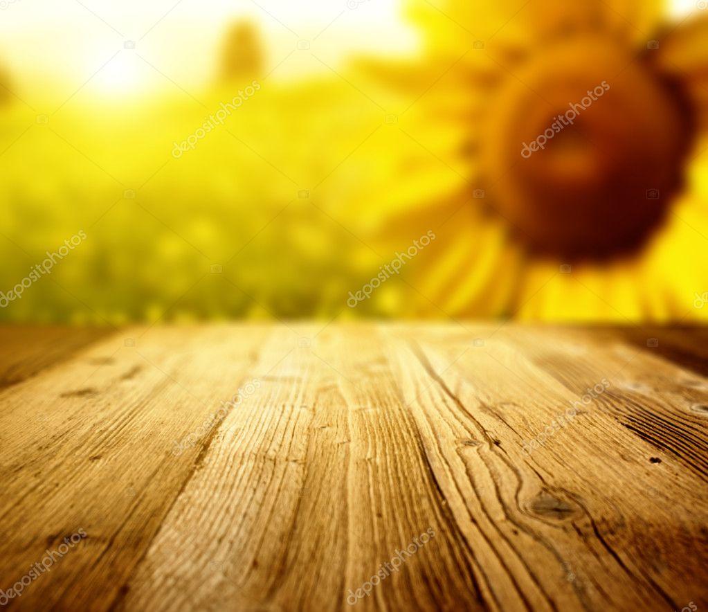 Tuscany sunflowers background