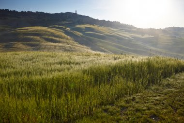 Beautiful green hills in Tuscany, Italy. stock vector