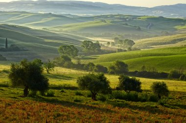 Countryside, San Quirico d Orcia , Tuscany, Italy