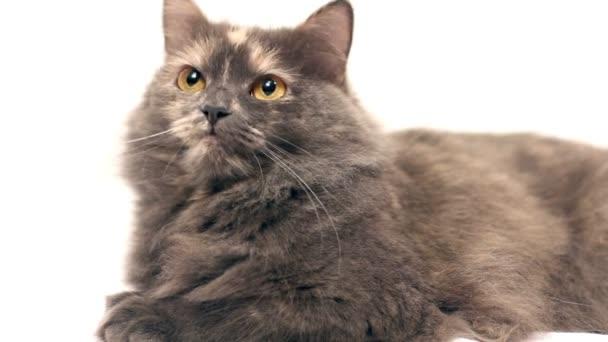 kočka na bílém pozadí