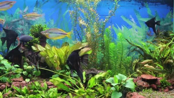 akvárium s colorfull ryb
