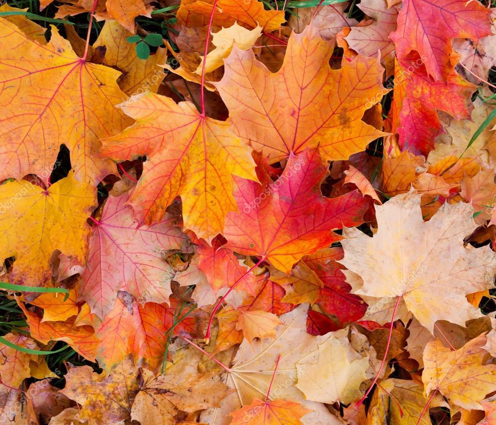 Fondo las hojas de oto o foto de stock vlad star 33463151 - Descargar autumn leaves ...