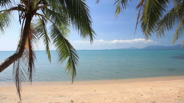 tropická pláž s kokosových palem