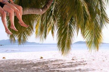 Legs of couple sitting on palm tree on a paradise island