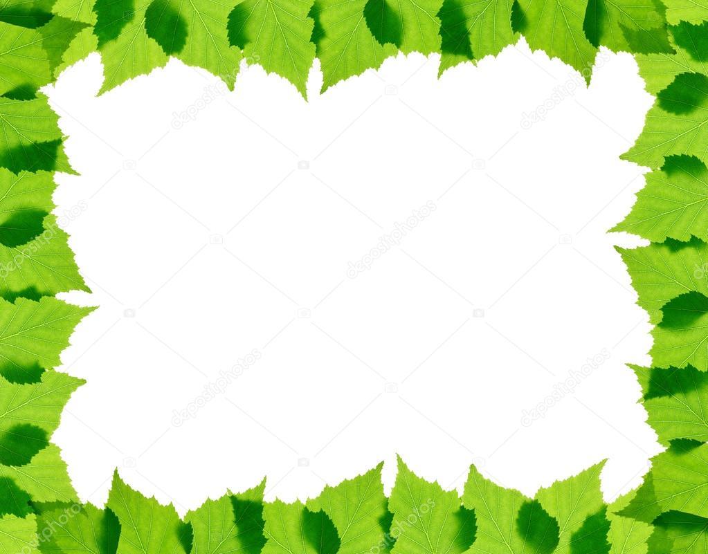 marco de hojas verde abedul — Fotos de Stock © rbvrbv #44447095