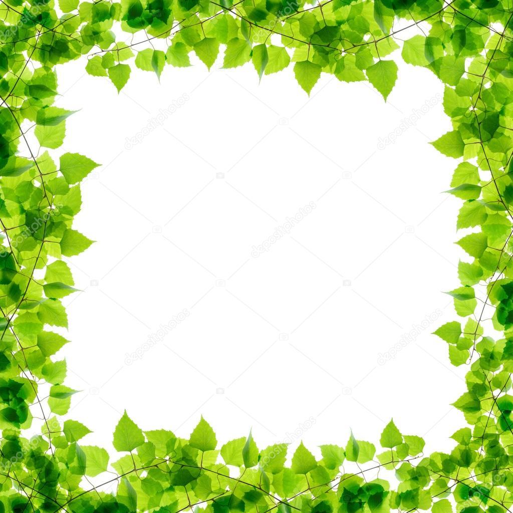 marco de ramas de abedul verde — Fotos de Stock © rbvrbv #44448473