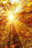 Fotografie podzimní Les