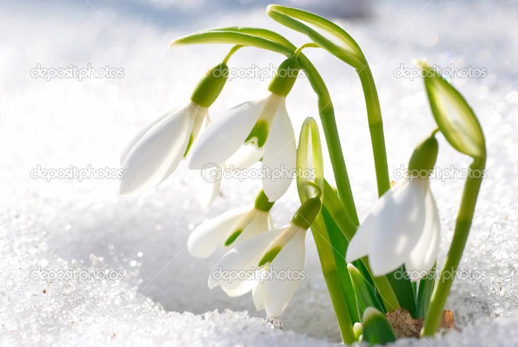 Живые Обои На Телефон Весна