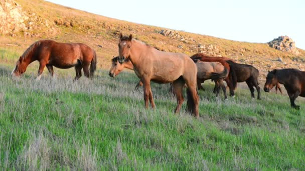 Herd of wild grazing horses on the field with green grass