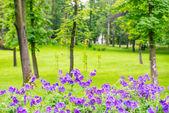 Fotografia parco verde