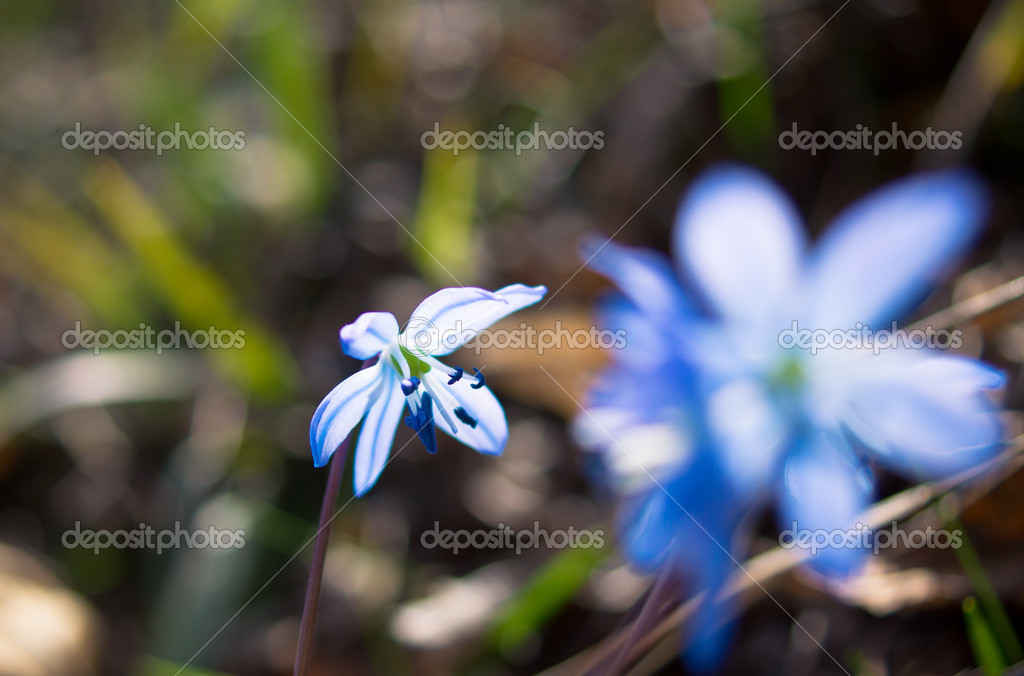 Erste Fruhlingsblumen Im Wald Stockfoto C Elet 1 42340921