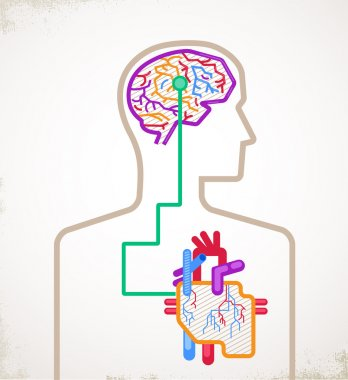 Brain and heart connected infographic