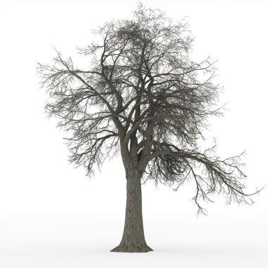 Ash tree leafless in 100Mpix