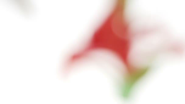 gyönyörű vörös liliom