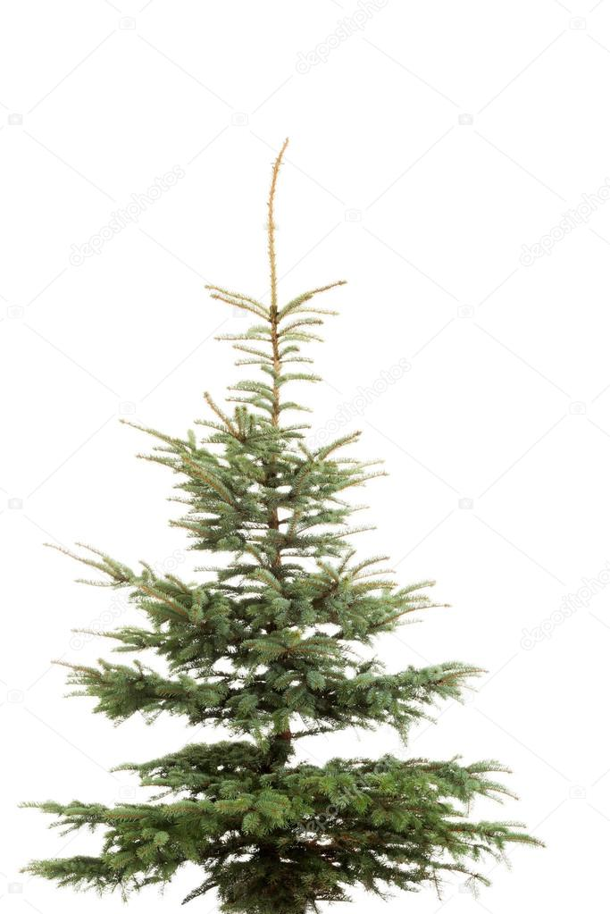 Christmas tree isolated on white.
